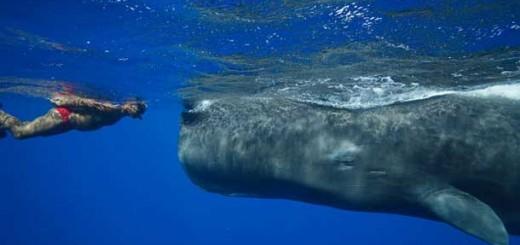 whale_man1