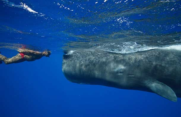 Swimming nose-to-nose with a giant Whale