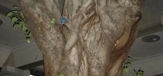 human shaped trees 5