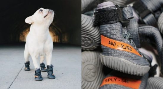 Yeezy-inspired dog shoes by Fresh Pawz